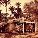 Tradicionalmente, el producto de la palmera ha sido utilizado como material constructivo para la fabricación de mobiliario, además del uso alimentario y otros usos como la fabricación de esteras, escobas, etc. Fotografía: AHME.