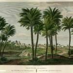 """Grabado del """"bosque"""" de palmeras. Las ilustraciones del siglo XIX nos presentan una visión idealizada de la ciudad y de sus """"bosques"""" de palmeras. Muestran una mirada romántica de la ciudad, influenciada por los relatos de los viajeros. Grabado original: AHME."""