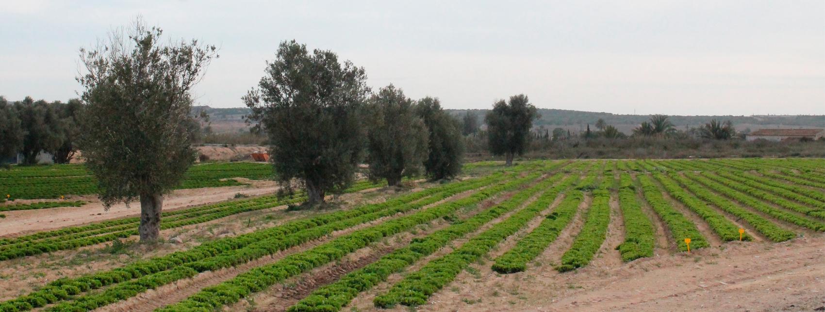Consulta pública ordenanza quema agrícola