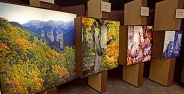 """La exposición """"El Bosque, mucho más que madera"""" recibe a más de 3.100 visitantes durante su primera semana"""