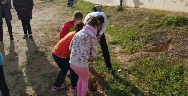 Alumnos del colegio La Paz de Torrellano plantan 260 árboles para conmemorar el Día del Árbol