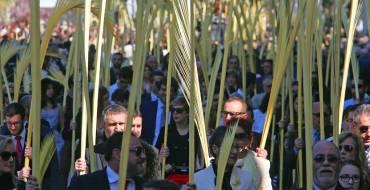 Regles per a l'adjudicació i instal·lació de les parades de palma blanca 2017