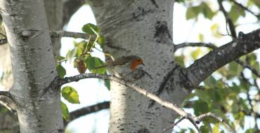 2º fin de semana de Mayo – Día Internacional de las Aves Migratorias