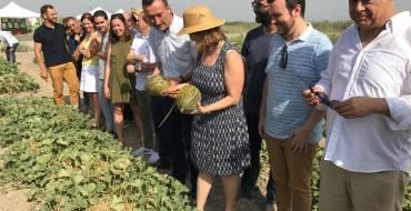La Consellera de Agricultura da el corte al primer melón de Carrizales en el Camp d'Elx