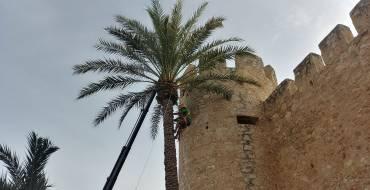 Concurso de trepa de palmera