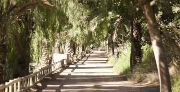 Elche celebra el XIX aniversario de la declaración del Palmeral como Patrimonio de la Humanidad