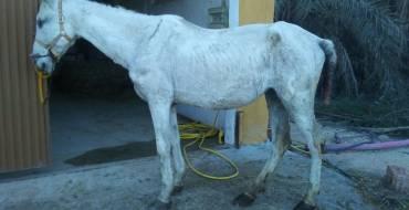Localitzada egua abandonada i traslladada per a atenció veterinària