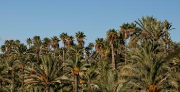 La Generalitat aprueba por primera vez el informe de evaluación ambiental del Plan Especial del Palmeral
