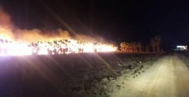 Incendio en huerto de palmeras en las cercanías de El Hondo