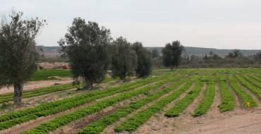 Aprobación inicial de la ordenanza reguladora de la quema agrícola