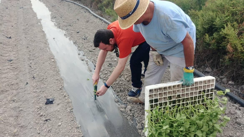 El Parque Natural Agrario de los Carrizales estima una producción de 400.000 melones
