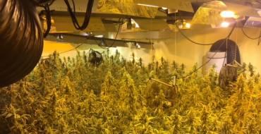 Detenida en Bonavista con 500 plantas de marihuana en un semisótano