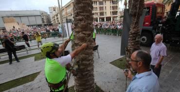 El concurso de trepa de palmera celebra su quinta edición