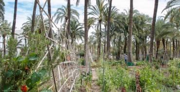 El Ayuntamiento de Elche apoya el trasvase de 20 hectómetros cúbicos de agua del Tajo
