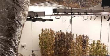 UTE localiza plantación de marihuana al atender una agresión doméstica