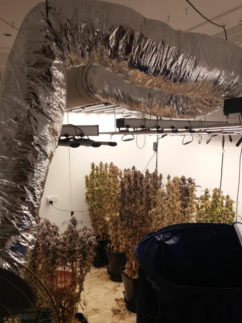 UTE localitza plantació de marihuana en atendre una agressió domèstica