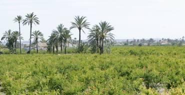El alcalde de Elche apoya las reivindicaciones de los regantes y afirma que el envío de agua es vital para el sur de la provincia y el Camp d'Elx
