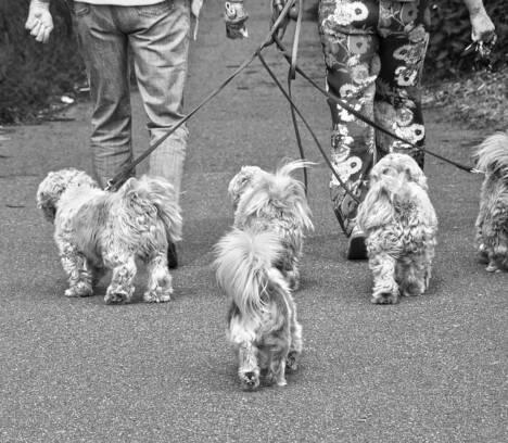 Resultado de la campaña por infracciones relativas a tenencia de animales de compañía