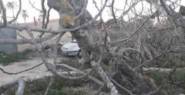 Robo frustrado en casa de campo y vehículo recuperado tras sendas llamadas