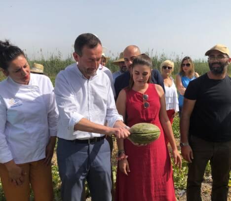 La producción de melón de Carrizales alcanzará esta temporada los 400.000 kilos