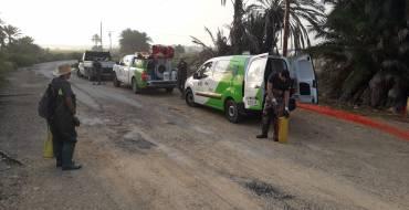 El Ayuntamiento intensifica la lucha contra la plaga de mosquitos generada por la DANA