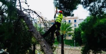 El Ayuntamiento inspecciona el arbolado de la ladera del río para retirar los ejemplares que tienen riesgo de caída