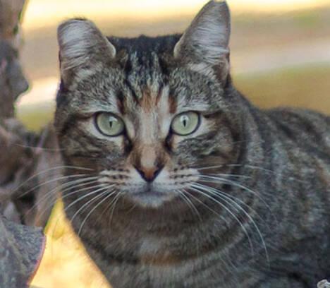 La diputación concede una subvención al Ayuntamiento para la esterilización de las colonias de gatos