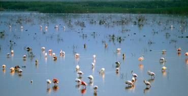 El Fondo d'Elx-Crevillent amplía su Zona de Especial Protección para las Aves