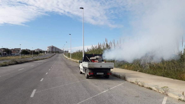 El Ayuntamiento de Elche impulsa la lucha contra los mosquitos con planes semanales dirigidos a las pedanías y barrios de la ciudad