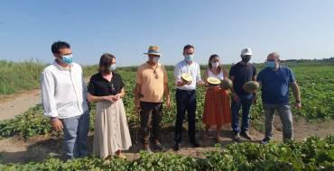 La Comunidad de Regantes de Carrizales espera obtener este año más de medio millón de kilos de melones