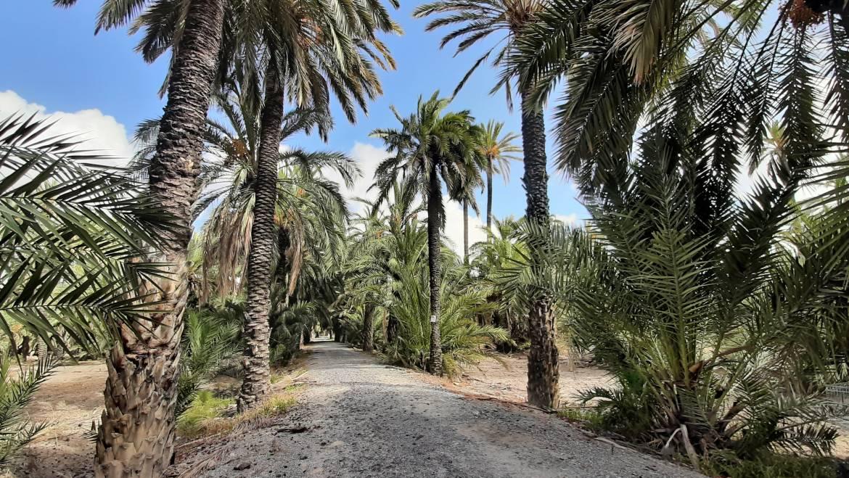 El nuevo sendero sur del río conectará con el Parque Natural El Hondo