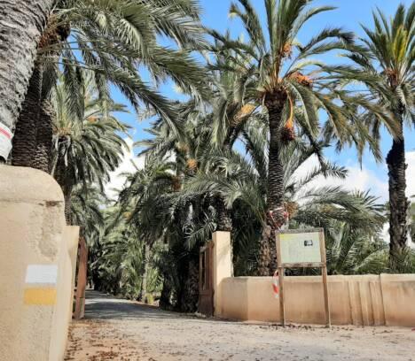 El Ayuntamiento recibe una ayuda del ministerio de Cultura de casi 42.000 euros para la conservación de la Ruta del Palmeral