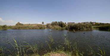 El Ayuntamiento de Elche remodelará una de las charcas del Clot de Galvany