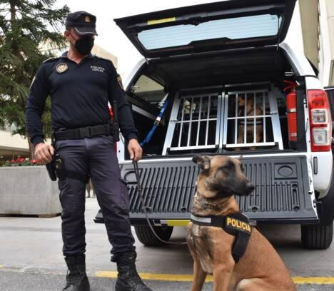 La Unidad Canina de la Policía Local de Elche estrena un nuevo vehículo adaptado para garantizar el bienestar, la seguridad y las condiciones climáticas de los perros