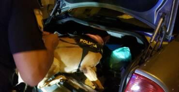 La Unidad Canina de la Policía Local participó en más de 100 controles de drogas y circulación el año pasado