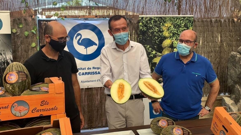 La Comunitat de Regants de Carsrisars espera obtindre aquest any més de 350.000 quilos de melons