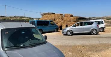 La Policía Local de Elche impide la venta ilegal de una decena de corderos vivos en una explotación ganadera